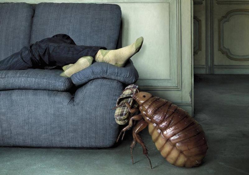 Как вывести клопов из квартиры или дома