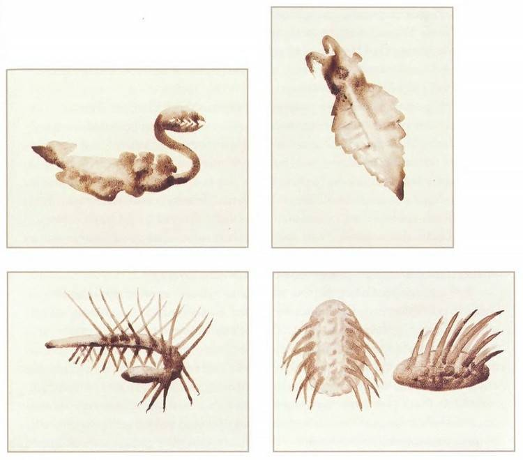 Стрекоза: особенности образа жизни насекомого-хищника