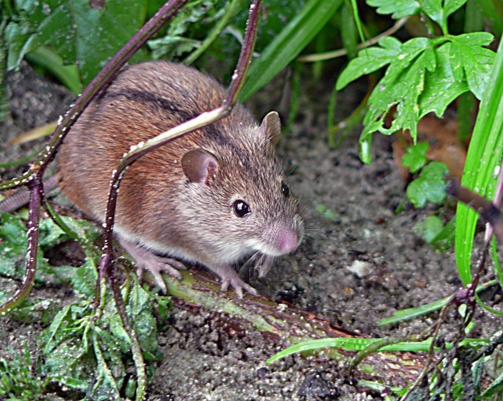 Все существующие виды и типы компьютерных мышек