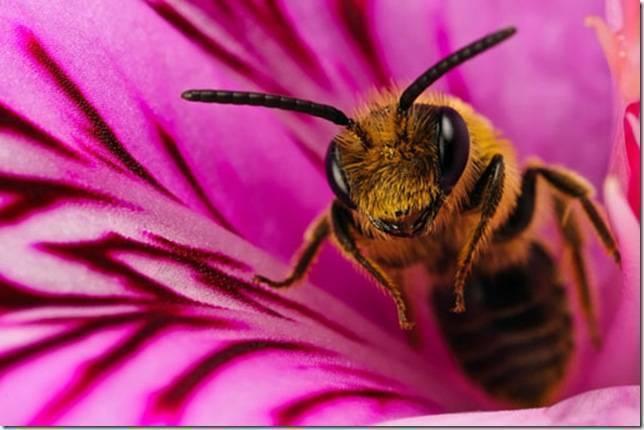 Все о пчелах (интересные факты)