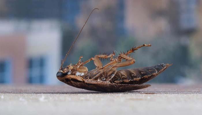 Борьба с тараканами при помощи дихлофоса. как травить тараканов? помогает или нет? меры безопасности при обработке