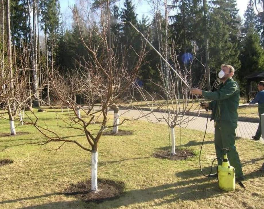 Опрыскивание плодовых деревьев от насекомых-вредителей после цветения