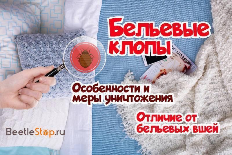 Бельевые или постельные клопы в квартире: откуда берутся и как от них избавиться в домашних условиях?
