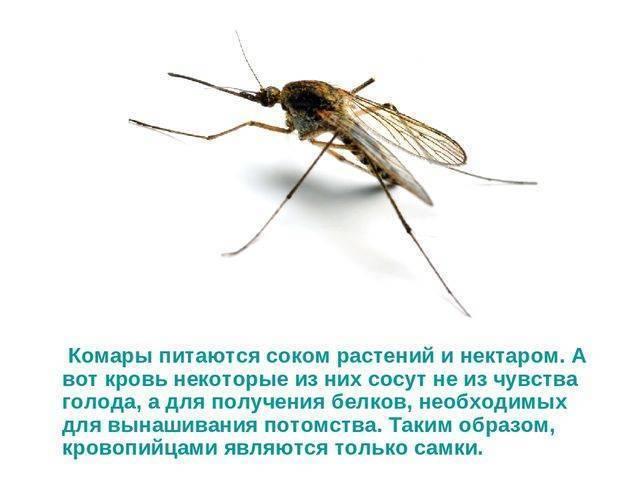 Интересные факты о комарах, виды, образ жизни, питание, размножение