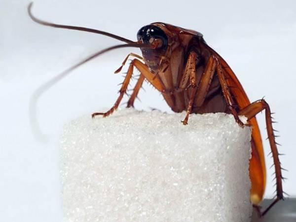Мраморные тараканы: содержание в домашних условиях