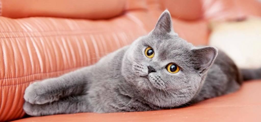 Шампунь от блох для кошек: обзор лучших и средние цены по россии