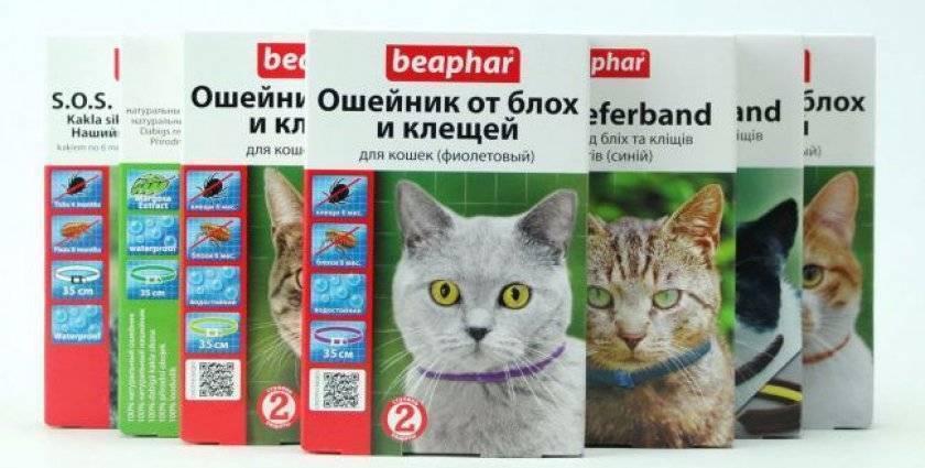 ТОП-10 лучших средств от клещей для кошек и котят - отзывы заводчиков и советы ветеринаров