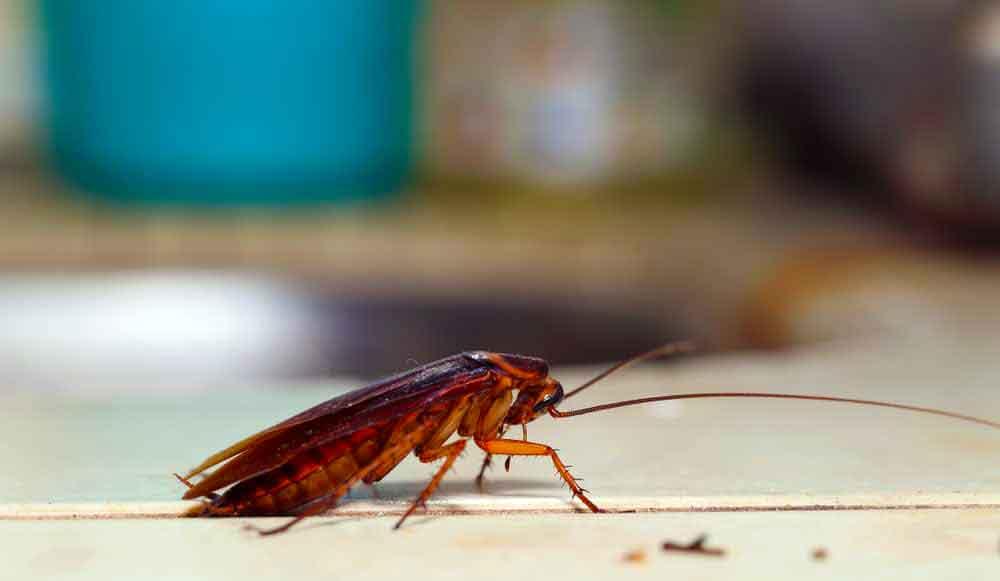 Способы борьбы с тараканами и профилактика их появления