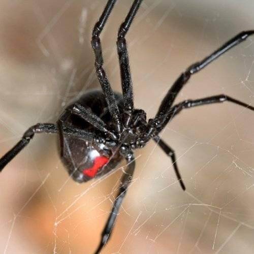 Лучшие ужастики про пауков