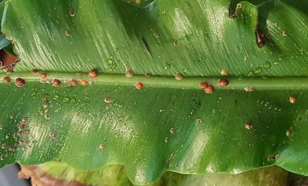 Вредители комнатных растений - меры борьбы с ними