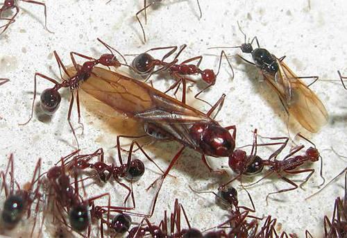 «сонник муравьи приснились, к чему снятся во сне муравьи»