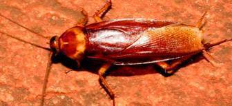 Что делать, если появились тараканы в квартире
