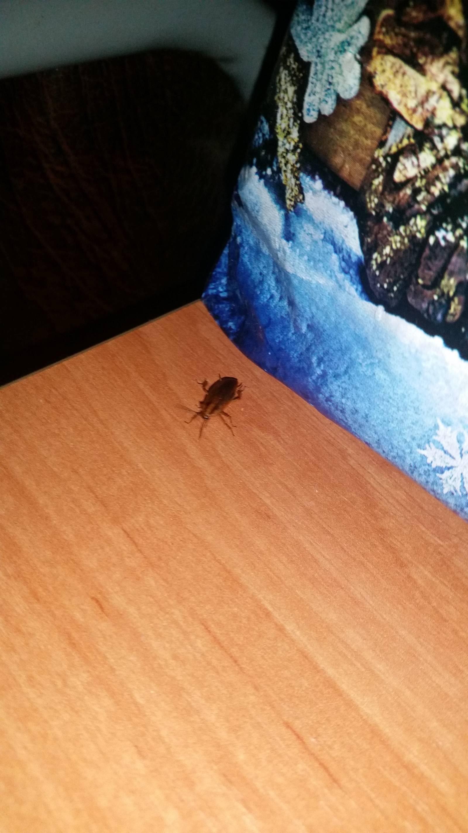 Куда ушли тараканы? возможные причины исчезновения этих насекомых