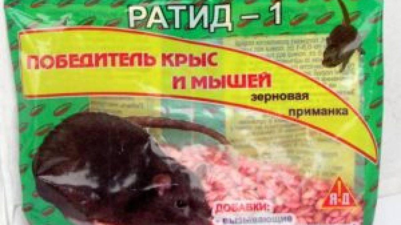 Уничтожение крыс специализированными службами