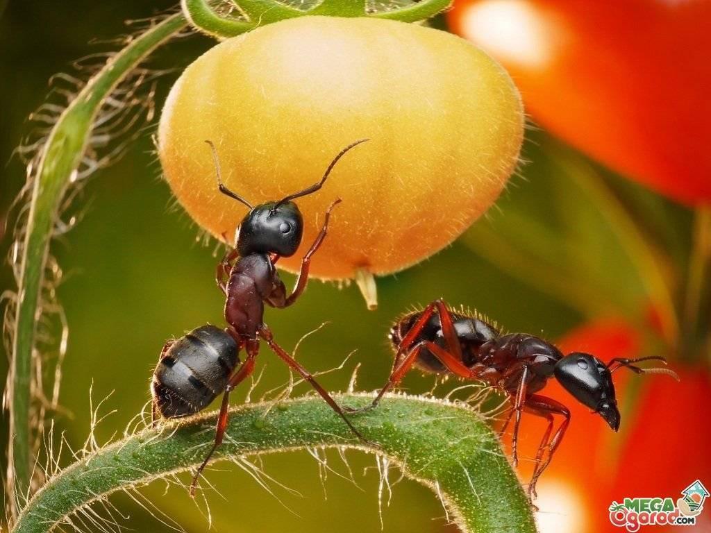 Несколько способов избавиться от муравьев на даче
