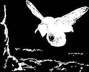 Пелопей – истребитель пауков