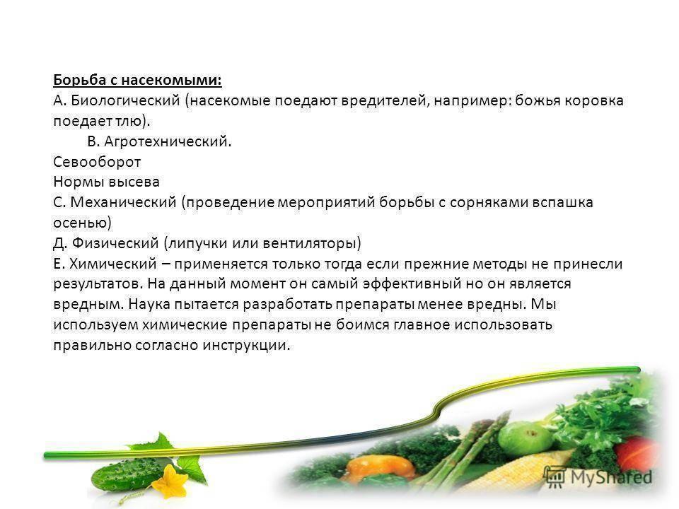Картофельная тля – опознаем и уничтожаем вредителя