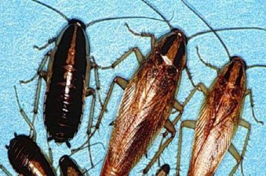 § 26. класс насекомые