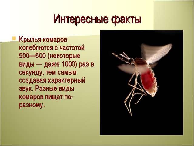 Личинка комара. отличительные особенности, жизненный цикл и стадии развития.