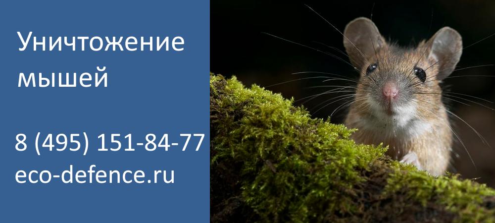 Как избавиться от мышей в квартире или частном доме