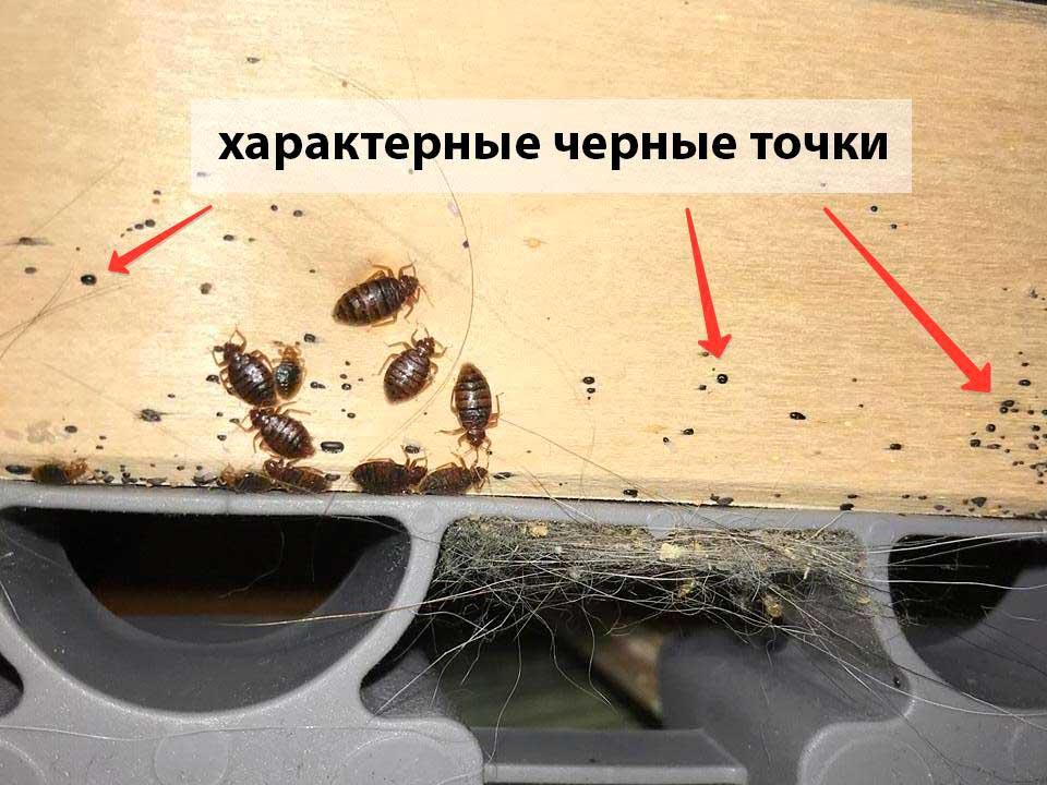 Как самостоятельно найти гнездо клопов в квартире