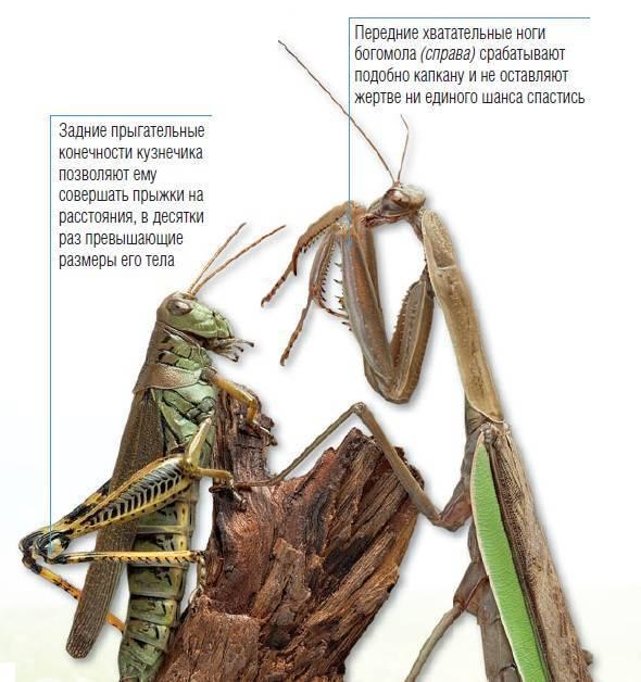 Насекомые с четырьмя лапами. сколько ног у муравья: основные признаки насекомого
