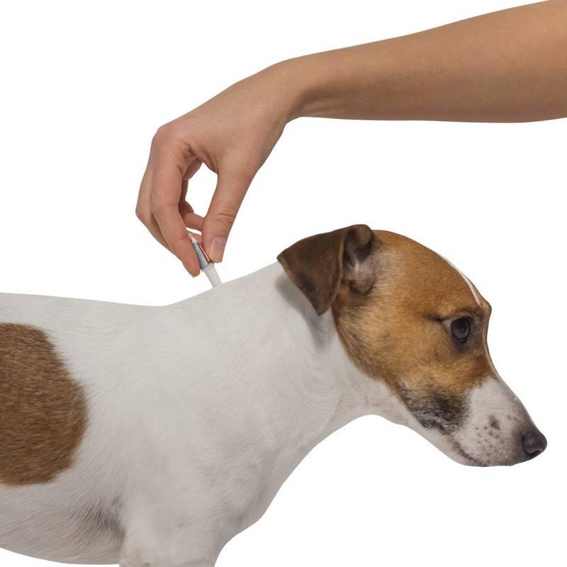 Как защитить собаку от комаров и мошек