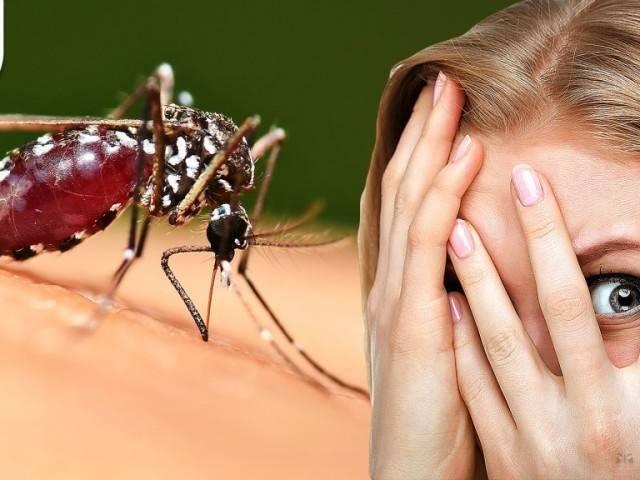 Что помогает от комаров – современные методы борьбы