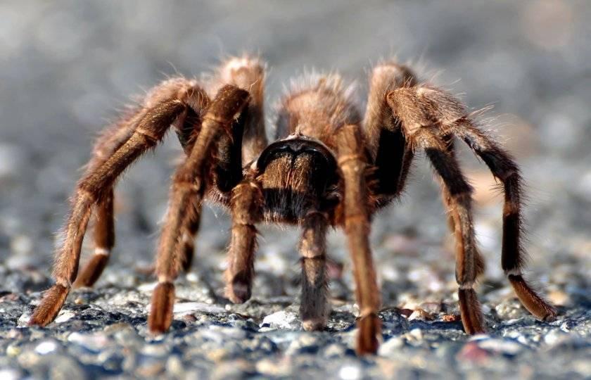 Сколько ног у паука и клеща и как отличить этих животных