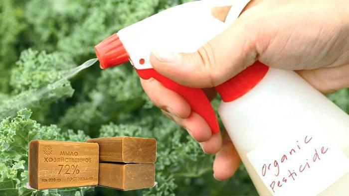 Рецепты растворов от тли: как правильно приготовить и применять