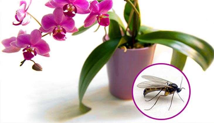 Как распознать и устранить вредителей орхидей? фото и полезные советы
