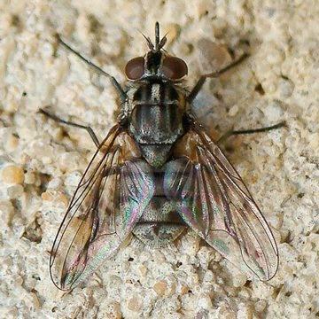 Почему мухи кусаются в августе?
