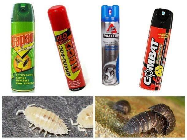 Как избавиться от мокриц в квартире: действенные способы борьбы с надоедливыми насекомыми