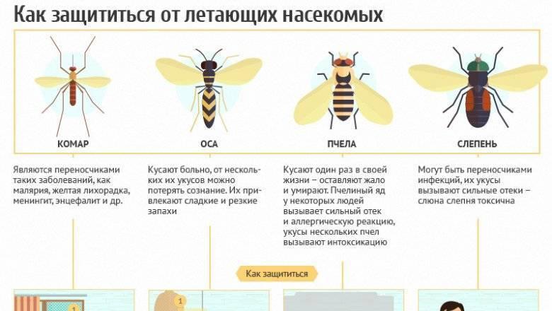 Является ли опасным укус комара?