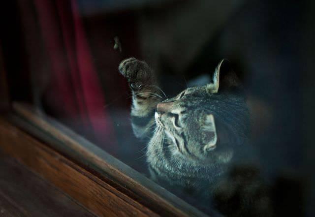 Что делать, если укусила кошка и опухла рука