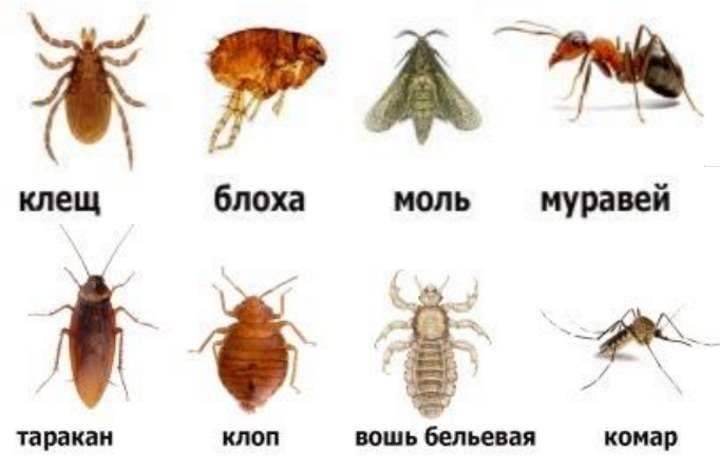 Почему появляются маленькие черные жучки в квартире и как избавиться от назойливых насекомых
