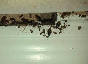 Гели в шприце от тараканов
