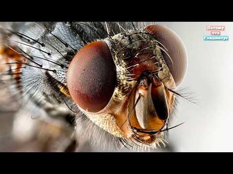 Что будет, если съесть яйца или личинки мухи. мясная муха: описание, личинки, срок жизни яйца мухи на продуктах