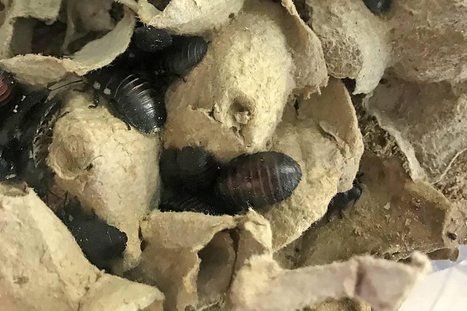 Чего боятся тараканы в квартире больше всего?