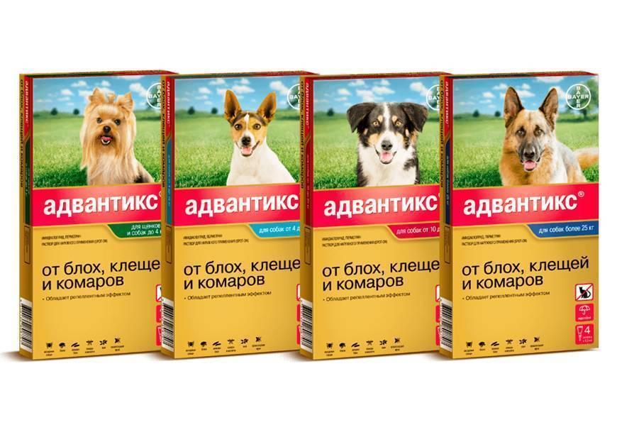 Как надёжно защитить собаку от клещей