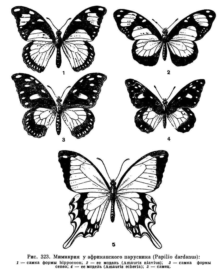 Как бороться с американской белой бабочкой?