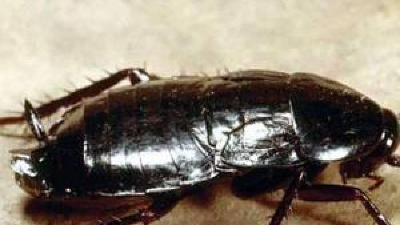 Аэрозоли комбат от тараканов
