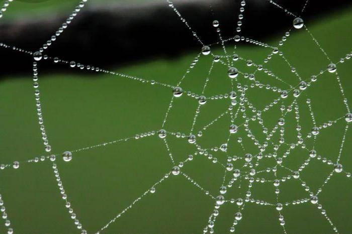 Кто плетет паутину паук или паучиха. как паук плетет паутину, откуда берется паутинный шелк? уникальные качества паучьего «текстиля»