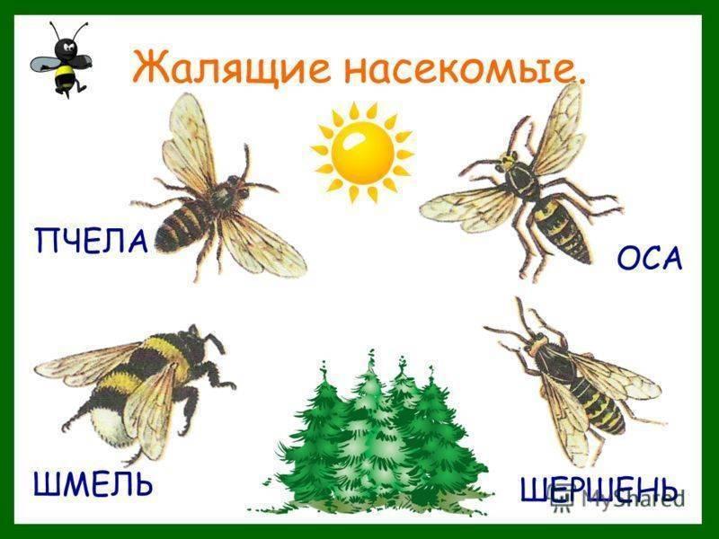 Чем помазать собаку от укусов комаров. что делать, если собаку покусали комары и мошки. профилактика укусов комаров у собак
