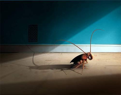 Помогает ли лавровый лист от тараканов