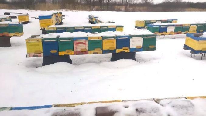 Пчеловодство зимой: как заботиться о пчелах?