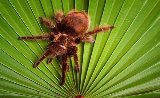 Искать паука