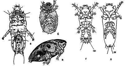 Сезон клещей: когда начинается и заканчивается активность паразитов, пик активности и максимальная опасность