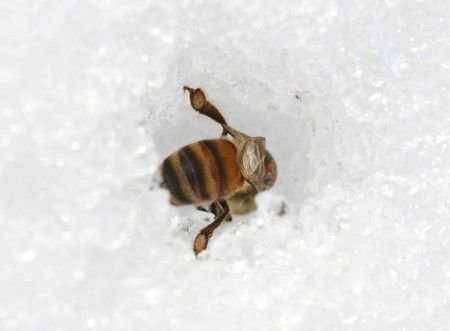 Особенности ухода за пчёлами зимой