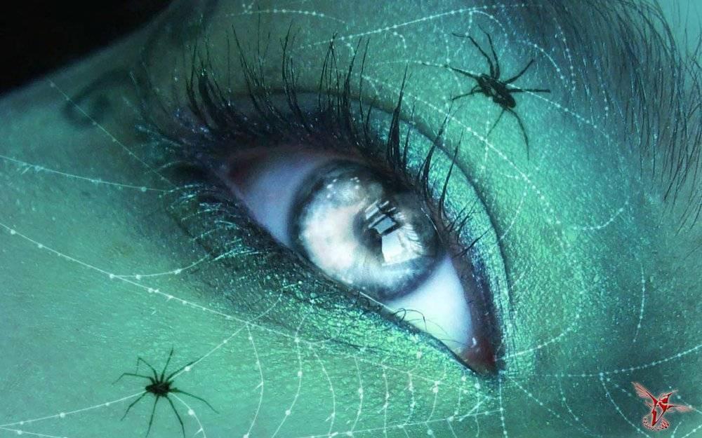 Какие пауки самые ядовитые и опасные на планете